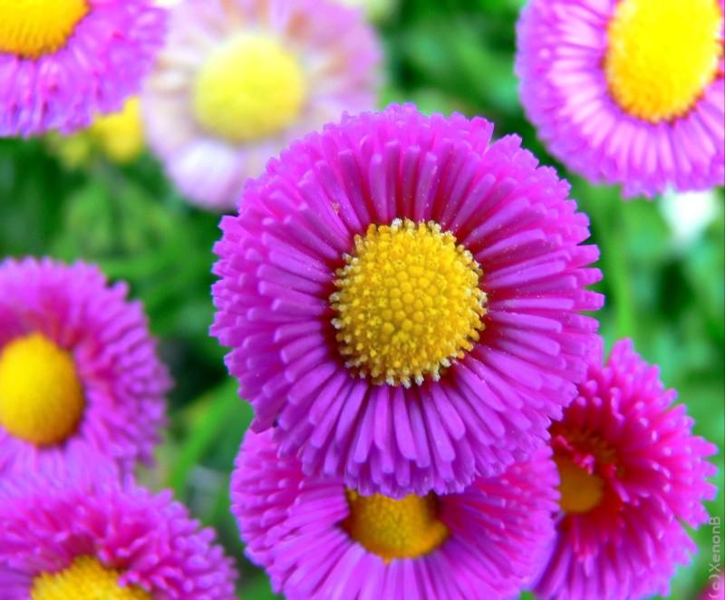 美丽大自然 漂亮的花儿