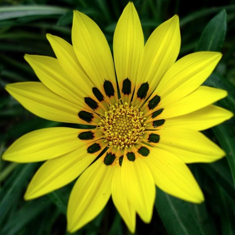 漂亮的花朵,大自然摄影,beautiful flowers