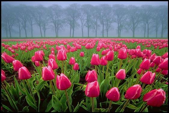 美丽大自然-漂亮的花儿